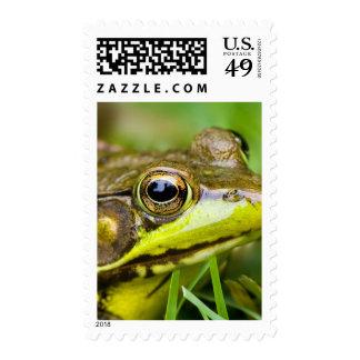 USA, New Jersey, Far Hills, Leonard J. Buck 4 Postage