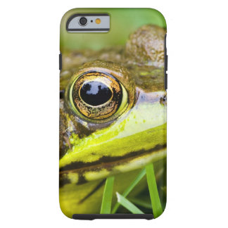 USA, New Jersey, Far Hills, Leonard J. Buck 4 Tough iPhone 6 Case