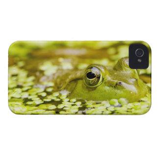USA, New Jersey, Far Hills, Leonard J. Buck 5 iPhone 4 Case-Mate Case