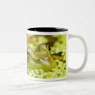 USA, New Jersey, Far Hills, Leonard J. Buck 5 Coffee Mug