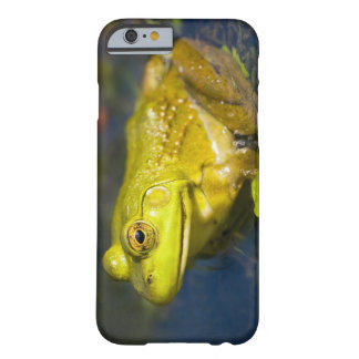 USA, New Jersey, Far Hills, Leonard J. Buck 6 Barely There iPhone 6 Case