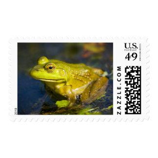 USA, New Jersey, Far Hills, Leonard J. Buck 6 Stamp
