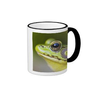 USA, New Jersey, Far Hills, Leonard J. Buck Coffee Mugs