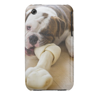 USA, New Jersey, Jersey City, Cute bulldog pup 2 iPhone 3 Case-Mate Cases