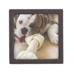 USA, New Jersey, Jersey City, Cute bulldog pup 2 Keepsake Box