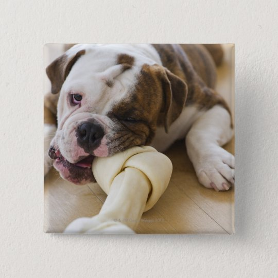 USA, New Jersey, Jersey City, Cute bulldog pup 2 Pinback Button