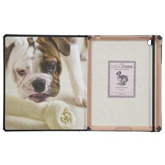 USA, New Jersey, Jersey City, Cute bulldog pup iPad Case