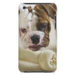 USA, New Jersey, Jersey City, Cute bulldog pup Case-Mate iPod Touch Case