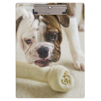 USA, New Jersey, Jersey City, Cute bulldog pup Clipboard