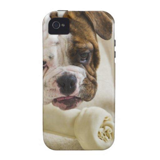 USA, New Jersey, Jersey City, Cute bulldog pup iPhone 4/4S Case