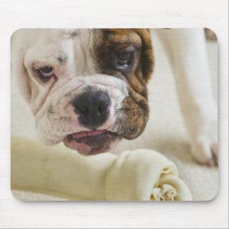 USA, New Jersey, Jersey City, Cute bulldog pup Mouse Pad