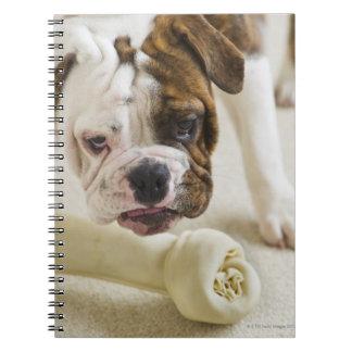 USA, New Jersey, Jersey City, Cute bulldog pup Notebook