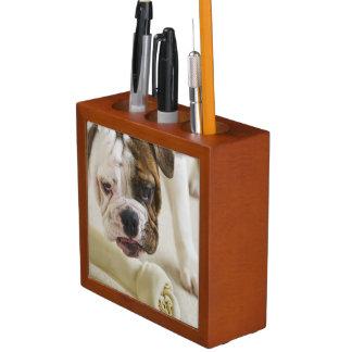 USA, New Jersey, Jersey City, Cute bulldog pup Pencil Holder