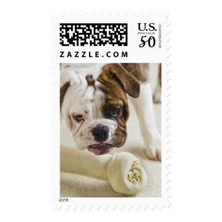 USA, New Jersey, Jersey City, Cute bulldog pup Postage