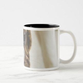 USA, New Jersey, Jersey City, Cute bulldog pup Two-Tone Coffee Mug