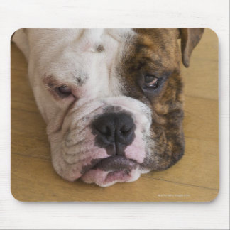 USA, New Jersey, Jersey City, Portrait of bored Mouse Pad