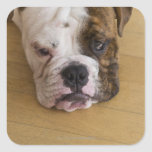 USA, New Jersey, Jersey City, Portrait of bored Stickers