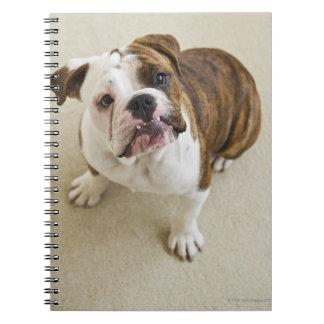 USA, New Jersey, Jersey City, Portrait of cute Notebook