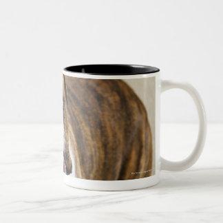 USA, New Jersey, Jersey City, Portrait of cute Two-Tone Coffee Mug