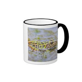 USA, New Jersey, Lakehurst, Lakehurst Naval Air Coffee Mugs