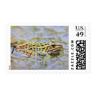 USA, New Jersey, Lakehurst, Lakehurst Naval Air Stamps