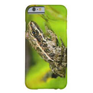 USA, New Jersey, Morristown. Young Pickerel Frog Barely There iPhone 6 Case