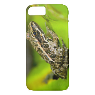 USA, New Jersey, Morristown. Young Pickerel Frog iPhone 8/7 Case
