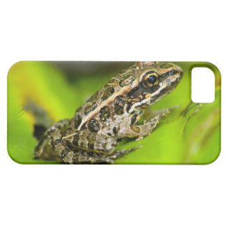 USA, New Jersey, Morristown. Young Pickerel Frog iPhone SE/5/5s Case