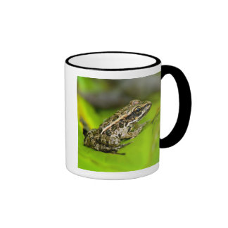 USA, New Jersey, Morristown. Young Pickerel Frog Mugs