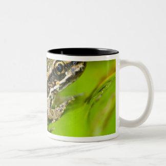 USA, New Jersey, Morristown. Young Pickerel Frog Mug