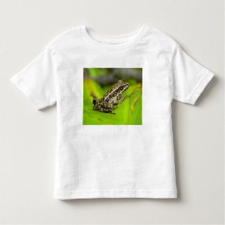 USA, New Jersey, Morristown. Young Pickerel Frog Toddler T-shirt