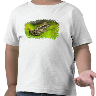 USA, New Jersey, Morristown. Young Pickerel Frog Tee Shirts