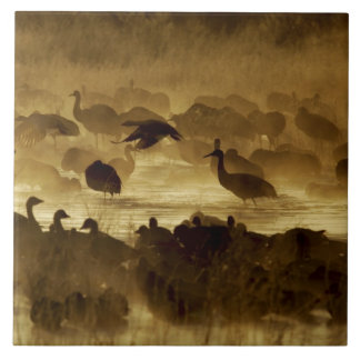 USA, New Mexico, Bosque del Apache National 2 Ceramic Tile