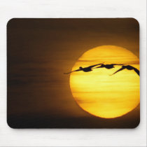 USA, New Mexico, Bosque del Apache National 2 Mouse Pad