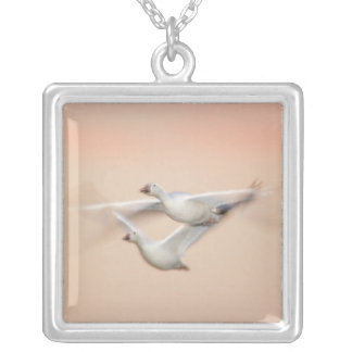 USA, New Mexico, Bosque del Apache National 3 Silver Plated Necklace