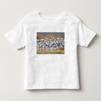 USA, New Mexico, Bosque del Apache National 3 T-shirt