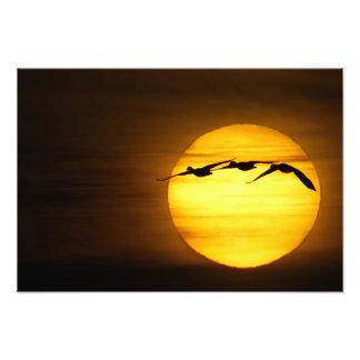 USA, New Mexico, Bosque del Apache National 4 Photo Print