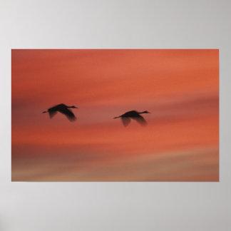 USA, New Mexico, Bosque del Apache Wildlife Poster