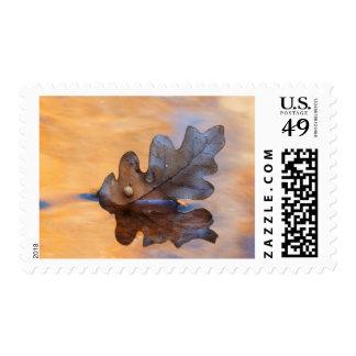 USA, New Mexico. Oak leaf in stream Postage