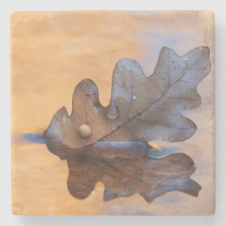 USA, New Mexico. Oak leaf in stream Stone Coaster