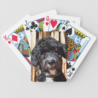 USA, New Mexico. Portuguese Water Dog Portrait Bicycle Playing Cards