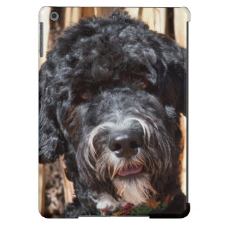 USA, New Mexico. Portuguese Water Dog Portrait Case For iPad Air
