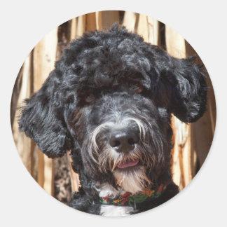 USA, New Mexico. Portuguese Water Dog Portrait Classic Round Sticker