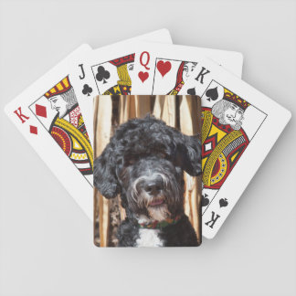 USA, New Mexico. Portuguese Water Dog Portrait Deck Of Cards