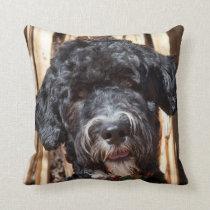 USA, New Mexico. Portuguese Water Dog Portrait Throw Pillow