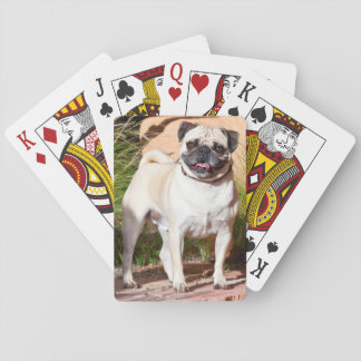 USA, New Mexico. Pug Standing In High Grasses Playing Cards