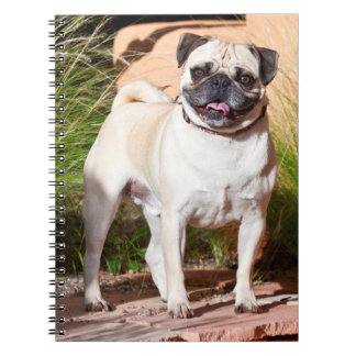 USA, New Mexico. Pug Standing In High Grasses Spiral Notebook
