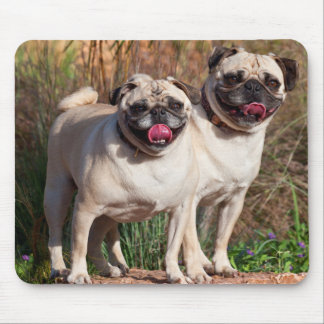 USA, New Mexico. Two Pugs Standing Together Mouse Pad