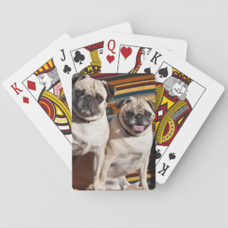 USA, New Mexico. Two Pugs Together Playing Cards