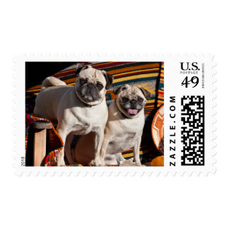 USA, New Mexico. Two Pugs Together Postage